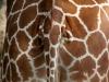 Giraffe Butt
